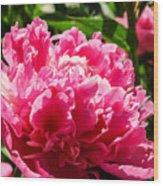 Sunlit Pink Peony Wood Print