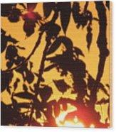 Sunlit Shadows Wood Print