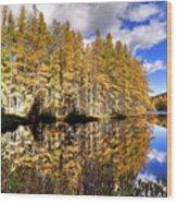 Sunlit Tamaracks Wood Print