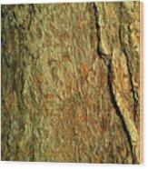 Sunlit Tree Bark Wood Print
