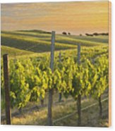 Sunlit Vineyard Wood Print