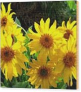 Sunlit Wild Sunflowers Wood Print