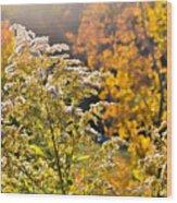 Sunlit Wildflower Wood Print