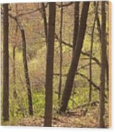 Sunlit Woods Wood Print