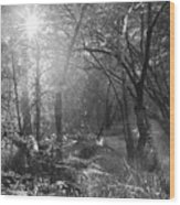 Sunlit Woods, West Dipton Burn Wood Print