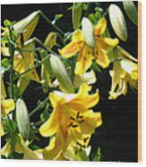 Sunlit Yellow Lilies Art Prints Botanical Giclee Baslee Troutman Wood Print