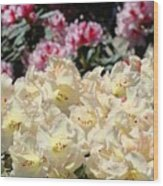 Sunlit Yellow Rhodies Art Print Creamy Rhododendrons Flowers Baslee Troutman Wood Print