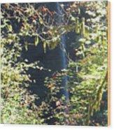 Sunlite Silver Falls Wood Print
