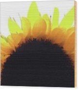 Sunflower Rise Wood Print