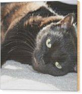 Sunning Black Cat Wood Print