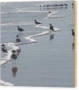 Sunning Gulls Wood Print