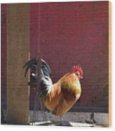 Sunning Rooster Wood Print
