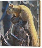 Sunning Squirrel Wood Print