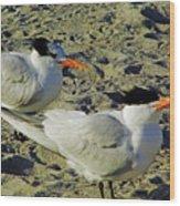 Sunning Terns Wood Print