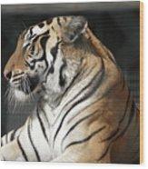 Sunning Tiger Wood Print