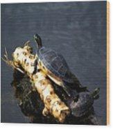 Sunning Turtles Wood Print