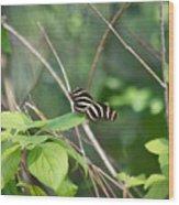 Sunning Zebra Longwing Butterfly Wood Print