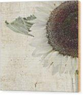 Sunny Albino Sunflower Wood Print