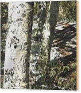 Sunny Aspen Shadows Wood Print