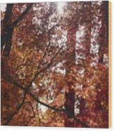 Sunny Autumn Day Poster Wood Print