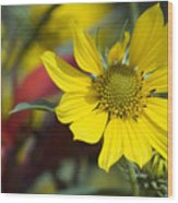 Sunny Blooms Wood Print