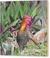 Sunny Cock Wood Print