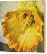 Sunny Daffodil Wood Print