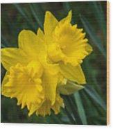 Sunny Daffodils Wood Print