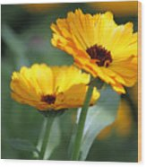 Sunny Day Flowers Wood Print