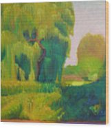 Sunny Day Indian Boundary Park Wood Print