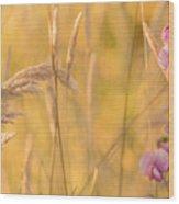 Sunny Garden 2 Wood Print