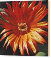 Sunny Iceplant Wood Print