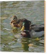 Sunny Mallard Ducks Wood Print