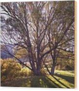 Sunny Mono Tree Wood Print