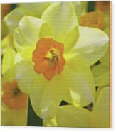 Sunny Narcissus Wood Print