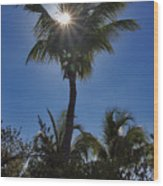 Sunny Palm Wood Print