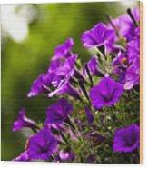 Sunny Petunias 1 Wood Print