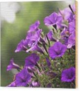 Sunny Petunias 2 Wood Print