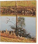 Sunny Pond Wood Print