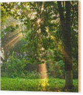 Sunny Rays Wood Print
