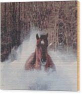 Sunny Running For The Barn. Wood Print