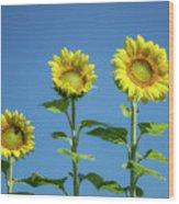 Sunny Skies Wood Print