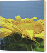 Sunny Summer Sunflowers Floral Art Baslee Troutman Wood Print