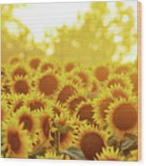 Sunny Sunflower Sunset Wood Print