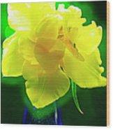 Sunny Tulip In Vase. Wood Print