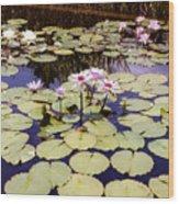 Sunny Waterlilies Wood Print