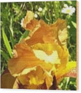 Sunny Wine Iris With Daisies Wood Print