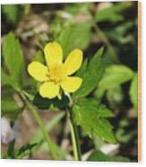 Sunny Yellow Buttercup Wood Print