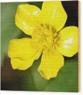Sunny Yellow Cinquefoil Wood Print