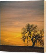 Sunrise 1-27-2011 Wood Print